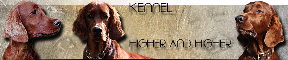 Kennel Higher and Higher