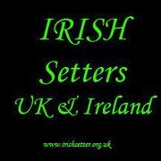 Irish_Setters_Uk